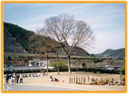 http://www.city.hannan.lg.jp/kankou/kankospot/asobu/1333611724656.html