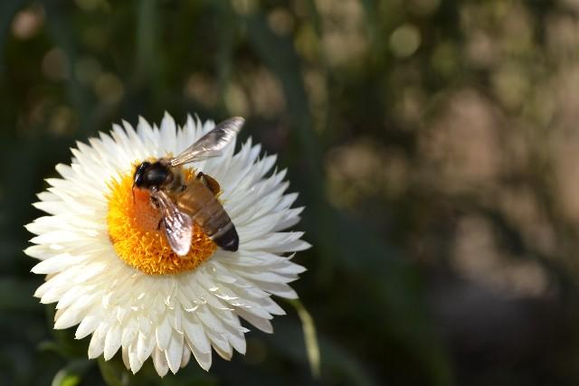 蜂に刺されるのが2回目だと危険?まずは症状を確認しよう